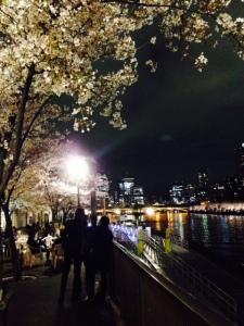 大川沿いの夜桜見物